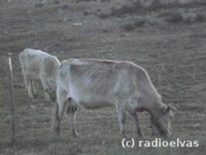 Vaca-Seca.jpg